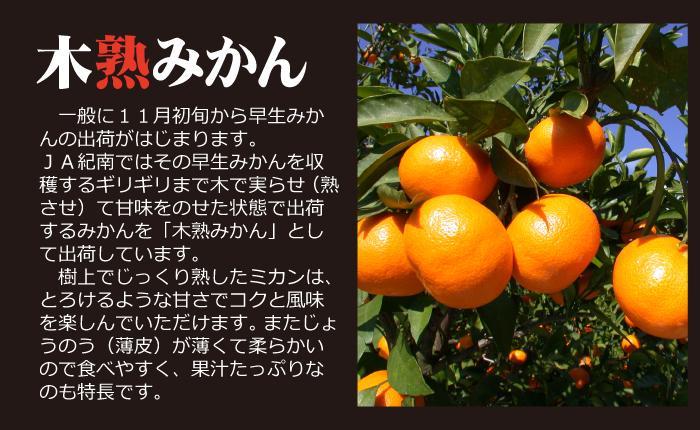 木熟みかん2