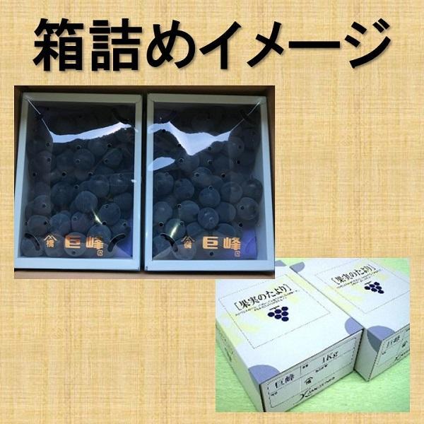 和歌山のぶどう 巨峰(種あり)3