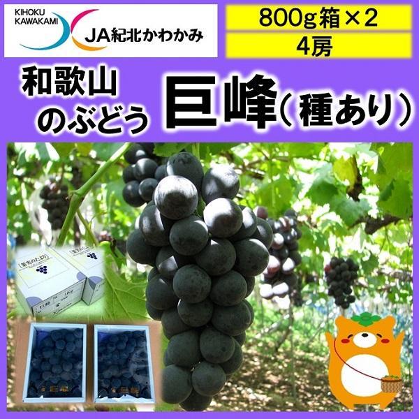 800g箱×2箱(2房×2)1