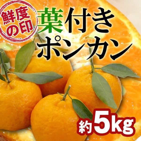 和歌山県産 葉付きポンカン(味・色・香りの三拍子そろったミカン)送料無料