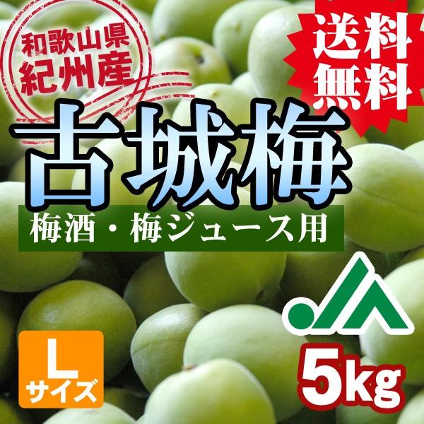 梅酒用・梅ジュース用 古城梅  和歌山県紀州産の青いダイヤと呼ばれる希少な青梅