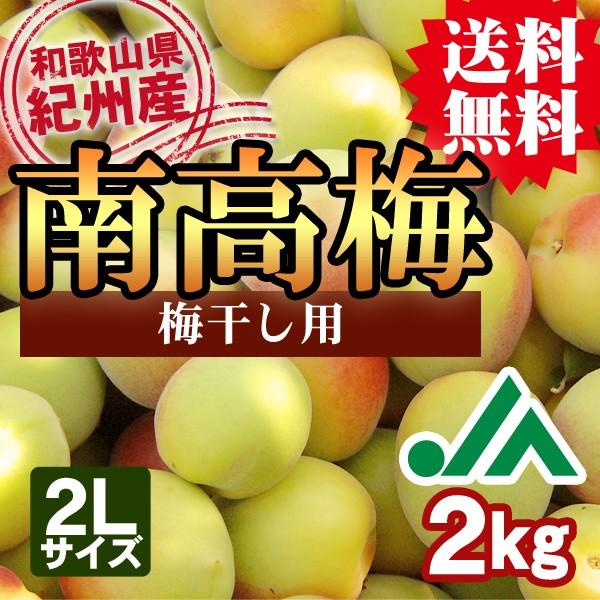 梅干し用 紀州産南高梅 和歌山県の農協JA紀南より安全安心な青梅をお届けします 送料無料