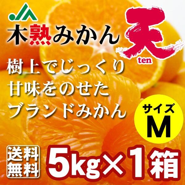 樹上完熟みかん 「天」 Mサイズ 5kg×1箱 送料無料2