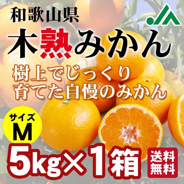 木熟みかん Mサイズ 5kg×1箱 送料無料5