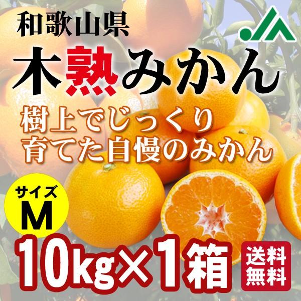 木熟みかん Mサイズ 10kg×1箱 送料無料6