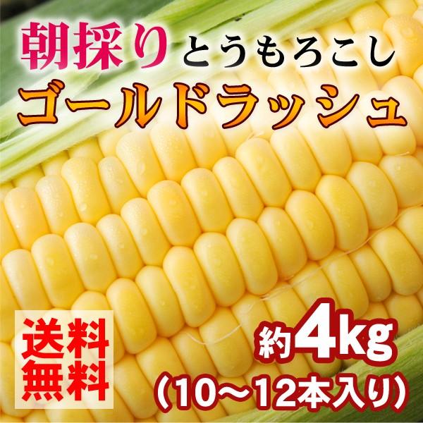 トウモロコシ 和歌山県とんだ産 朝採りとうもろこし ゴールドラッシュ 生で食べられる甘い玉蜀黍