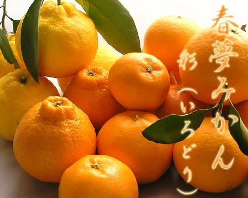 春柑橘 彩(いろどり)